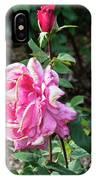 First Prize Rose Hybrid Tea IPhone Case