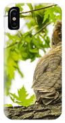 Fledgling Great Horned Owl IPhone Case