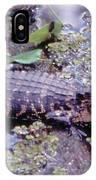 Florida Alligator Sunning IPhone Case