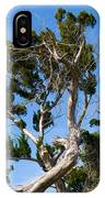 Florida Cedar Tree IPhone Case