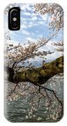Flowering Cherry Tree IPhone Case