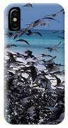 Flying Terns  On The Great Barrier Reef IPhone Case