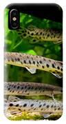 Four Aquarium Fishes In Zoo IPhone Case