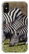 Four For Lunch - Zebras IPhone Case