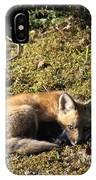 Fox Kit IPhone Case