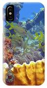 French Reef 1 IPhone Case