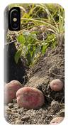 Fresh Red Potatoes On Ground IPhone Case