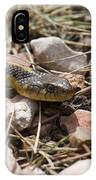 Garter Snake On The Trail In The Pike National Forest Of Colorad IPhone Case