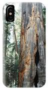 General Grant Grove Sequoia IPhone Case