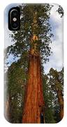 General Sherman Tree IPhone Case