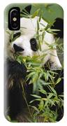 Giant Panda Eating Bamboo IPhone Case