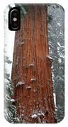 Giant Sequoia Tree IPhone Case