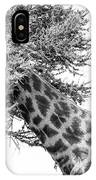 Giraffe Hide And Seek IPhone Case