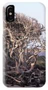 Gnarled Oak Trees IPhone Case