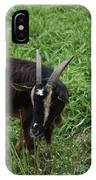 Goat With Long Horns In A Grass Field IPhone Case
