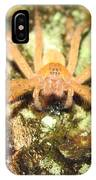 Gold Hunting Spider IPhone Case