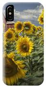 Golden Blooming Sunflowers With Red Barn IPhone Case