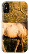 Golden Bull Elk Portrait IPhone Case