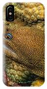 Goldentail Moray IPhone Case