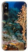 Gorgonian IPhone Case