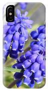 Grape Hyacinth Closeup IPhone Case