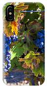 Grapes Ready For Harvest IPhone Case