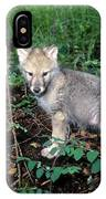 gray Wolf Pup in Woods IPhone Case