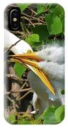 Great Egret Chicks And Mom IPhone Case