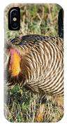 Greater Prairie Chicken Male 9 IPhone Case
