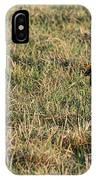 Greater Prairie Chicken Males 1 IPhone Case
