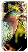 Green Heron At Green Cay Wetlands IPhone Case