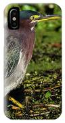 Green Heron In Swampy Water IPhone Case