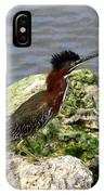 Green Heron Ruffled Feathers IPhone Case