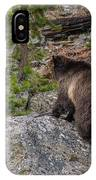 Grizzly Sow In Yellowstone Park IPhone Case