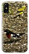 Grosbeak With Quizzical Look IPhone Case