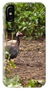 Guinea Fowl 1 IPhone Case