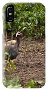 Guineahen Looking For Food IPhone Case