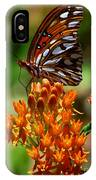 Gulf Fritillary On Butterflyweed IPhone Case