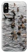 Happy Harbour Seals IPhone Case