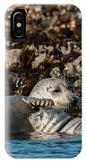 Harbor Seal And Pup IPhone Case
