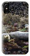 Harbor Seals Basking - Oregon Coast IPhone Case