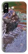 Harbour Seal IPhone Case