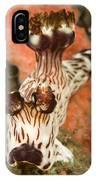 Harlequin Shrimp Hymenocera Elegans IPhone Case