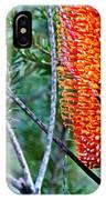 Heath Banksia From Fairfax Walk IPhone Case