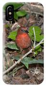 Hepatic Tanager At The Coba Ruins IPhone Case