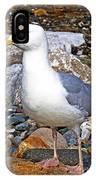 Heron Gull IPhone Case