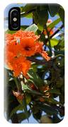 Hibiscus Rosasinensis With Fruit On The Indian River IPhone Case