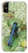 Hiding Dragonfly IPhone Case