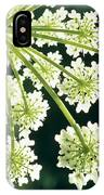 Himalayan Hogweed Cowparsnip IPhone Case