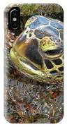 Honu In The Water IPhone Case